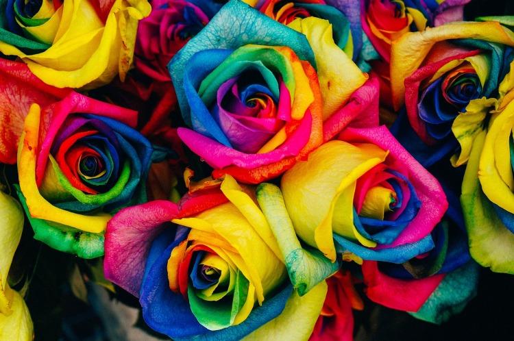 rosas arco iris